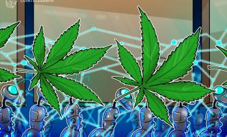 AE与乌拉圭大麻生产公司合作